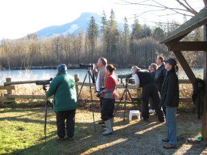 eagle watchers